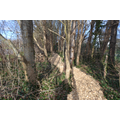 Woodland Walkway - after development Feb 2016