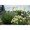 Raised Planting Beds Summer 2015