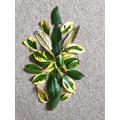 Leaf art from homer