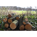 A nice stack of logs! Feb 2016