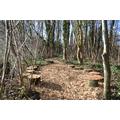 Woodland Walkway - after development Feb 2016