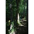 Woodland Walkway Summer 2015