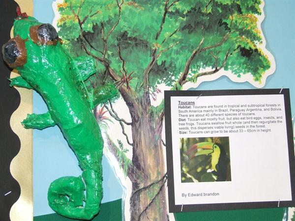 Rainforest Creatures Y4