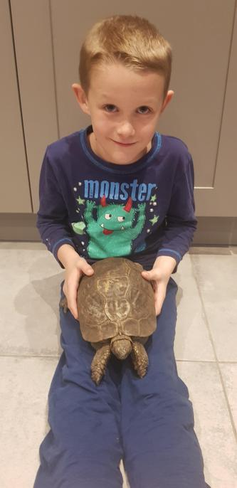 Cuddles for your lovely tortoise!