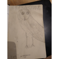 Tom T's fantastic barn owl
