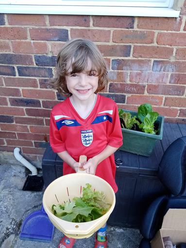 Homegrown lettuce for dinner!