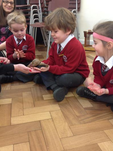 Chestnut Class and the giant snail