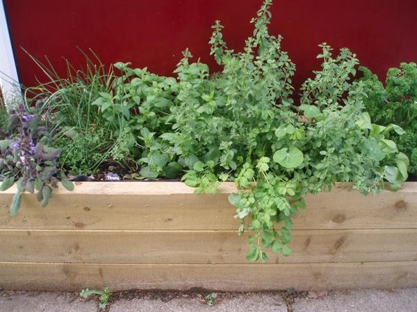 We are growing different herbs