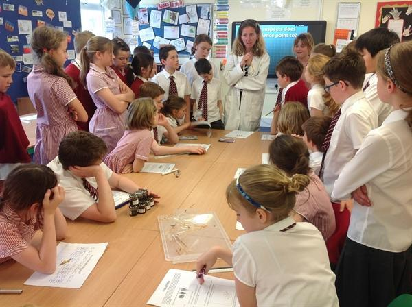 Science week - murder mystery forensics