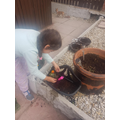 Leila planting her flowers.