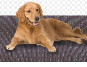 The dog is on a mat
