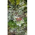Poppy's butterfly