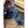 Meet Steven's new puppy Pebbles.