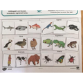 Jaden has been grouping animals in science
