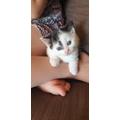 Meet Willow's new kitten Lottie - she's beautiful!