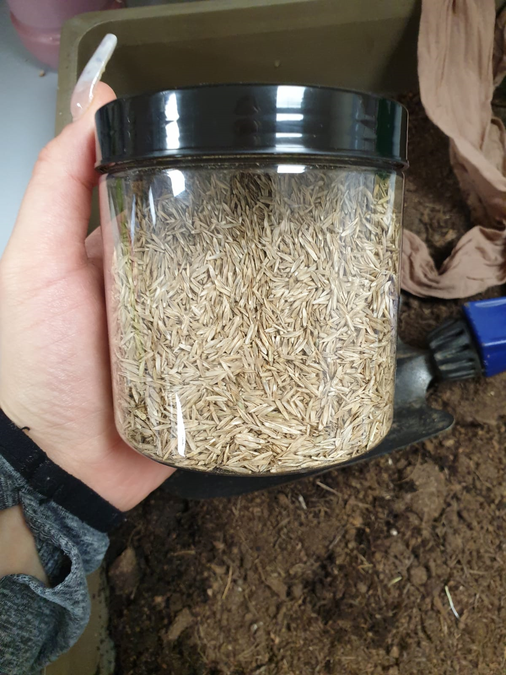You need some grass seed