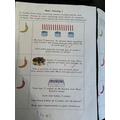 Aleena's maths challenges!