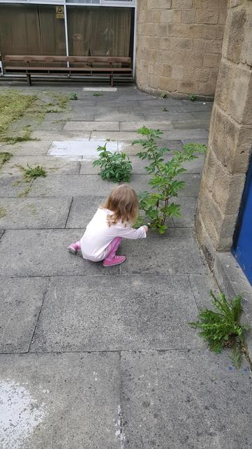 Pulling out the weeds at church.