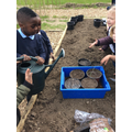 The children are planting some strawberry plants!