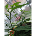 Igor's plants