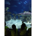 We saw all types of sharks!