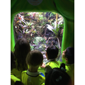 We saw land animals too, like frogs!