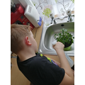 Igor looking after his plants at home