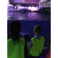 Watching the penguins swim!