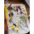 Jamine's flower press picture :)