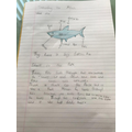 All about sharks - some fantastic writing by Tia.