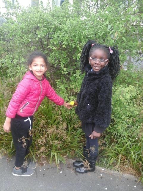 Muskaan and Testimony exploring dandilions