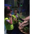 Looking at all the fish and mammals!