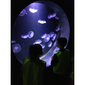 The jellyfish looked so beautiful!