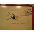 drawing and labelling minibeasts