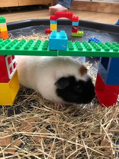 Smartie's obstacle course