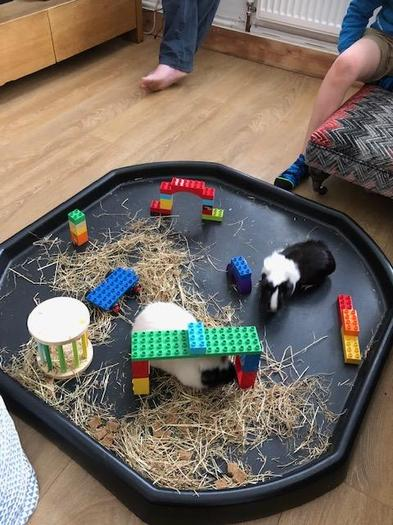Oreo's obstacle course