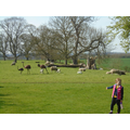 This is Caitlin and her sheep and lambs