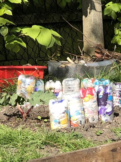 Rhubard - surrounded by Eco Bricks