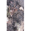 finding slow worms
