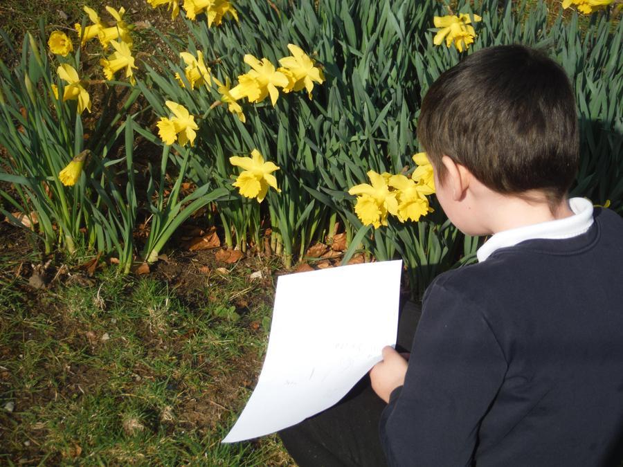 Investigating flowers