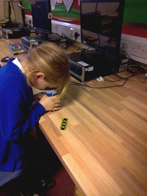 Using digi-microscopes to look at wildlife