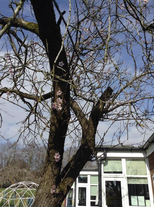 Spring walk - first signs of blossom