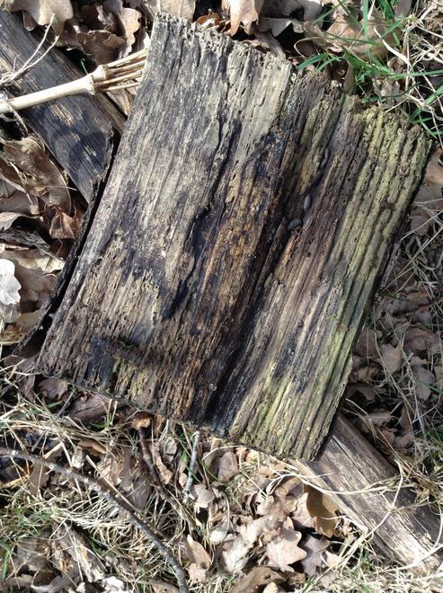 Spring Walk  - minibeasts under a log