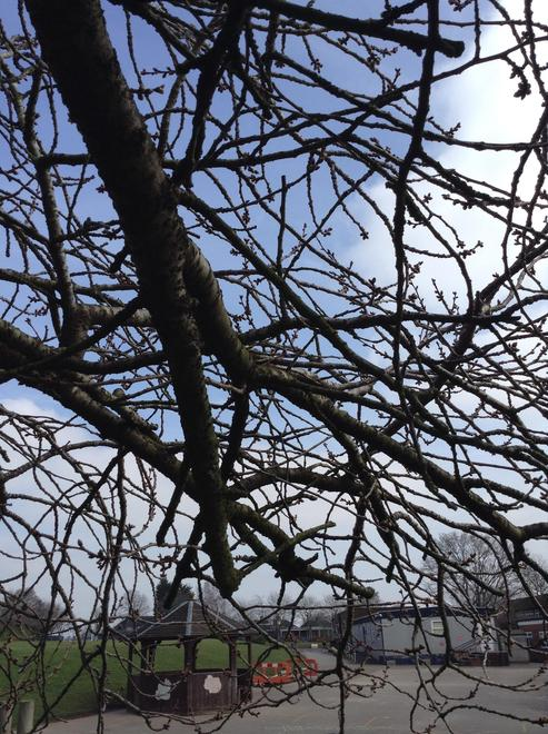 Buds on the branches of the trees