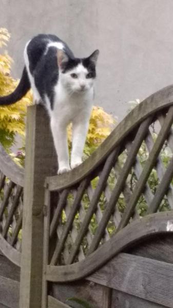 Miss Amery's lovely cat, Percy!