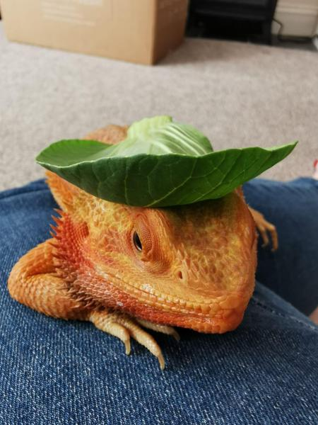 Dave enjoying his leaf sombrero!