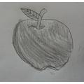 Still life drawing apple sketch