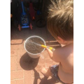 Rowen planting his sunflower