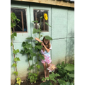 Amber has grown a giant sunflower!  Wow!