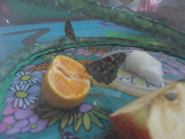 Our butterflies have emerged from their cocoons!